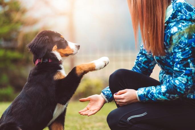 puppy-basics